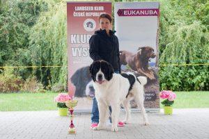 Harry Czubaryk, landseer club, landseerzkrkonos.cz, chovatelská stanice landseer, chovný pes, krycí pes