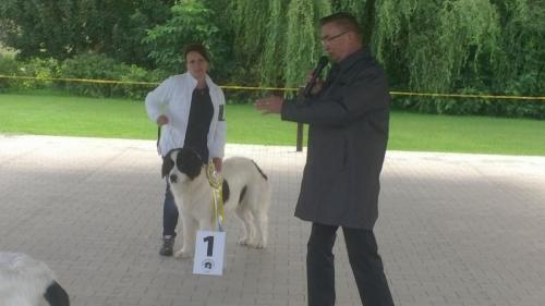 landseer, vítěz speciální výstavy Mladá Boleslav 2017, landseer